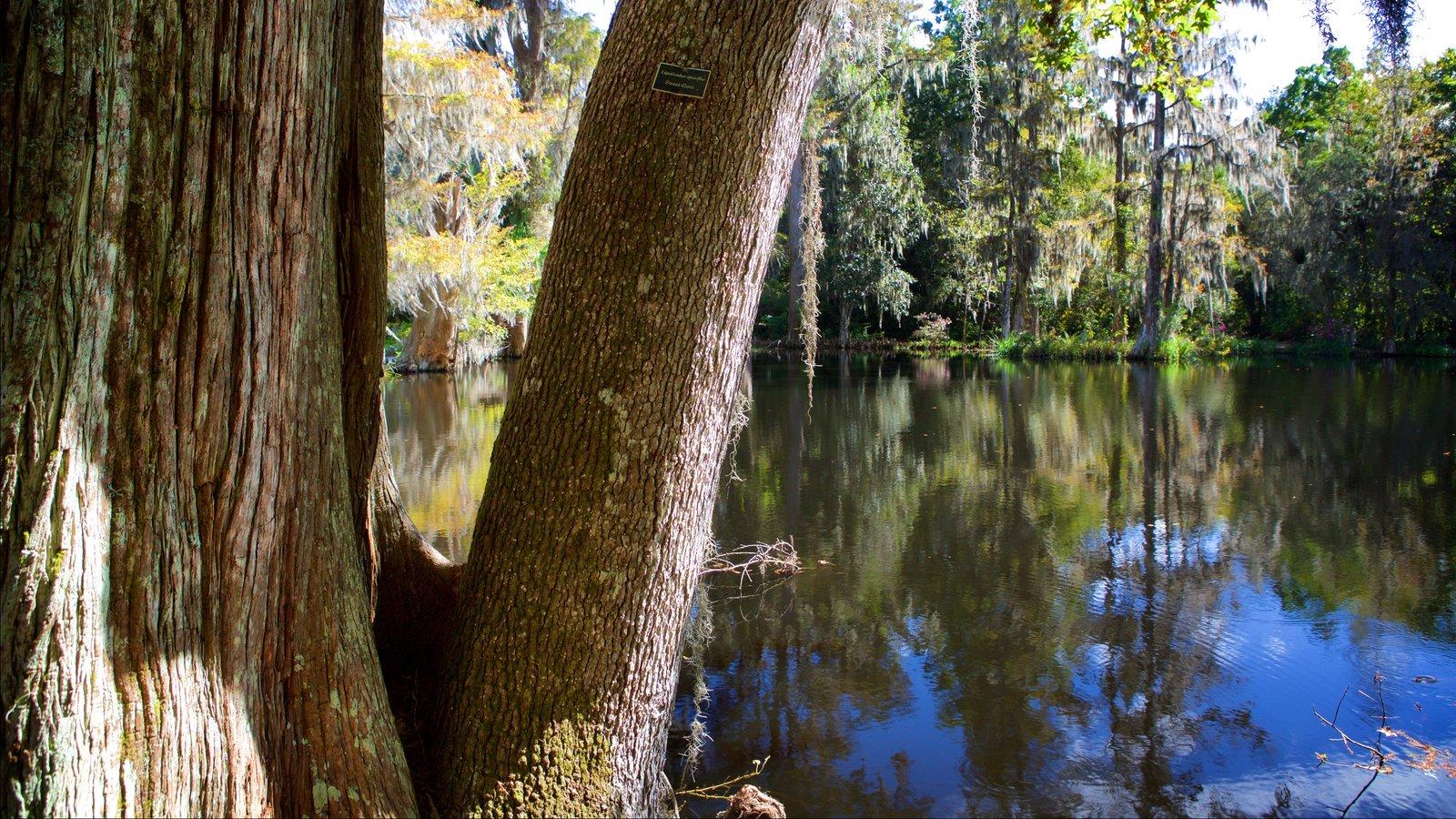 Magnolia Plantation and Gardens mostrando um rio ou córrego