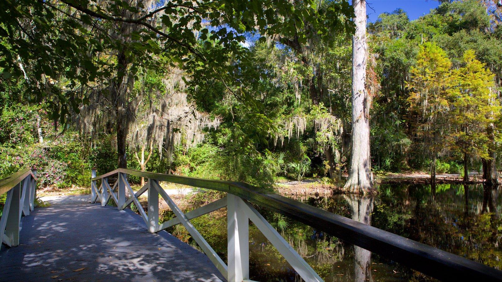 Magnolia Plantation and Gardens que inclui um rio ou córrego, uma ponte e um jardim