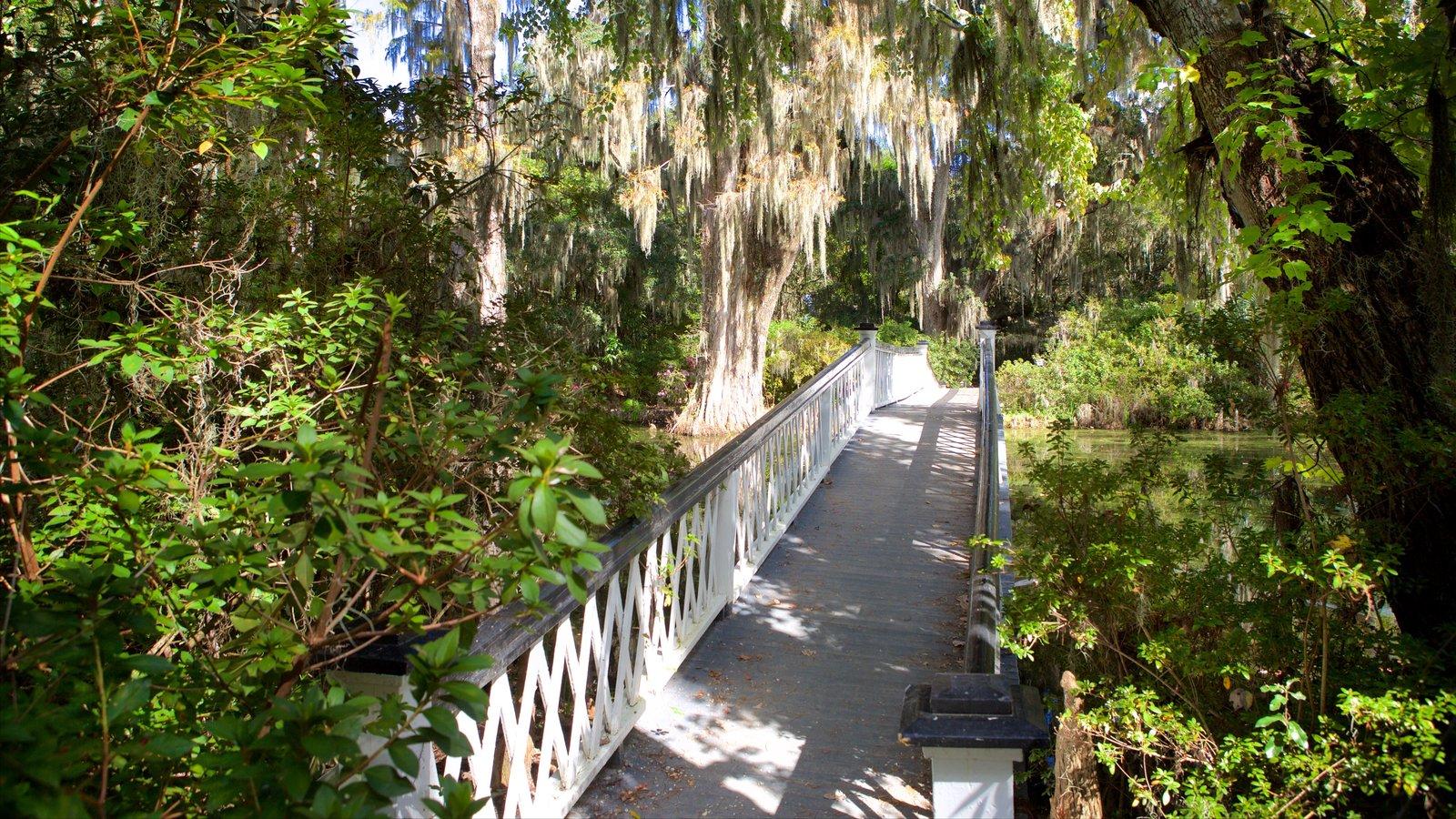 Magnolia Plantation and Gardens que inclui uma ponte e um parque