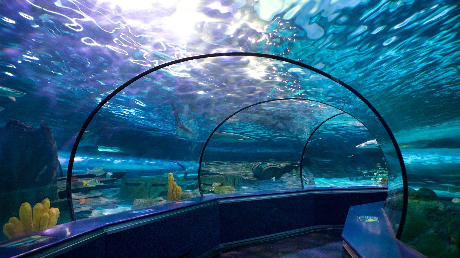Ripley\'s Aquarium caracterizando vida marinha