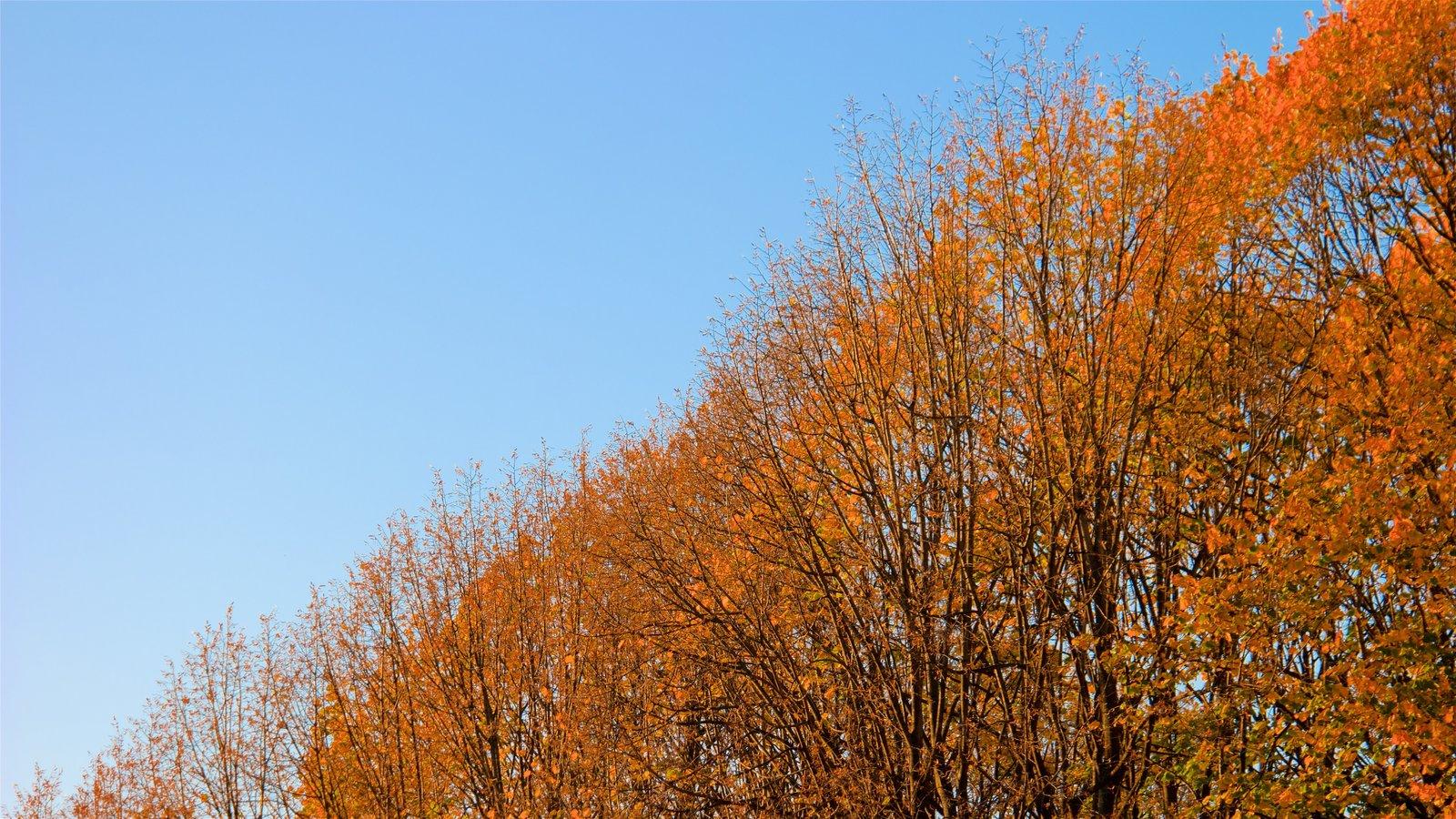 7º Arrondissement caracterizando um jardim e folhas de outono