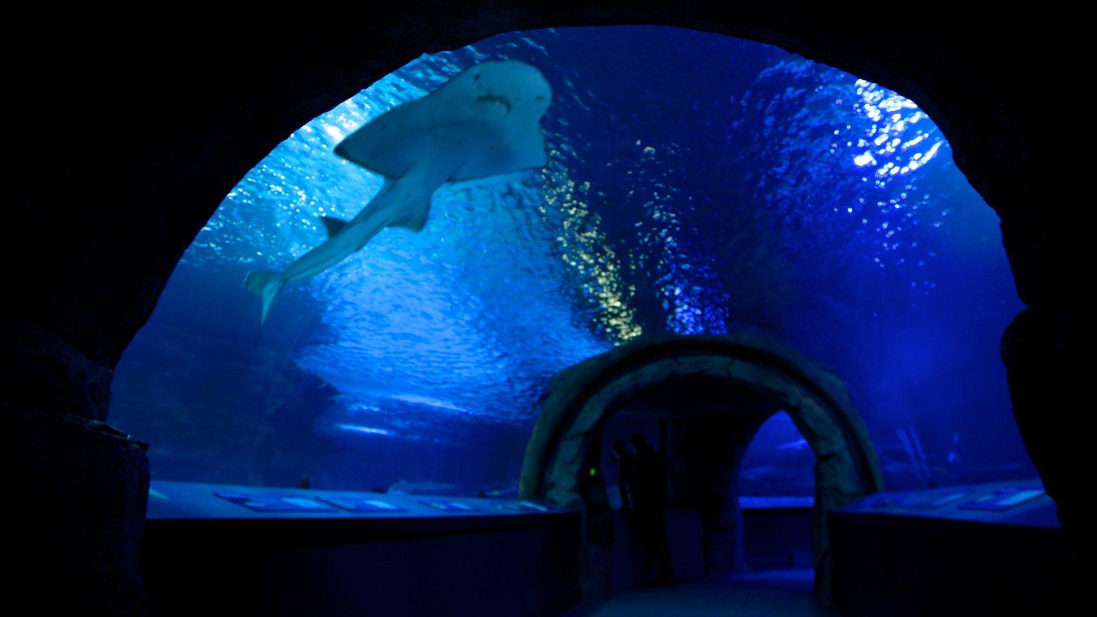 Newport Aquarium que inclui vida marinha e vistas internas