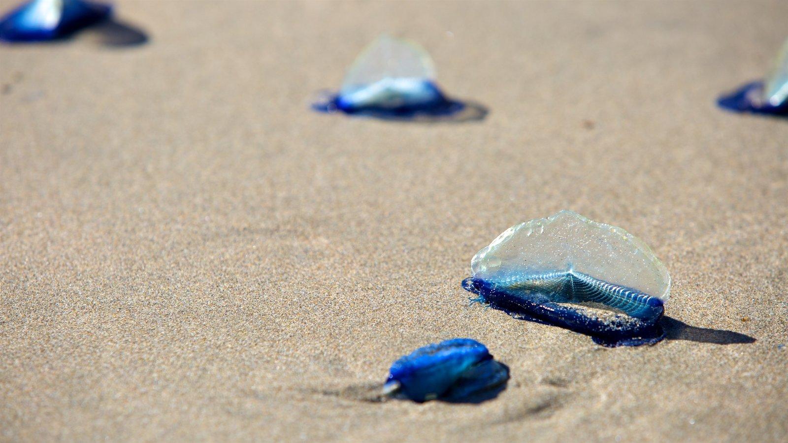 Bandon Beach que inclui vida marinha e uma praia de areia