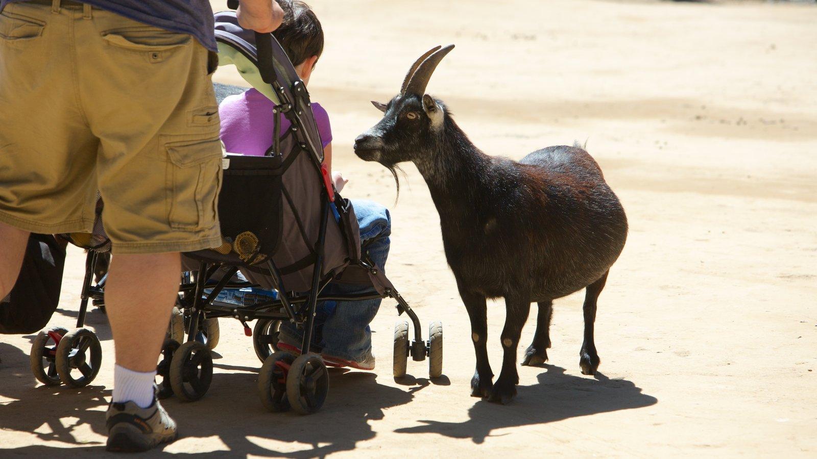 West Coast Game Park Safari que inclui animais de zoológico e animais fofos ou amigáveis assim como uma família