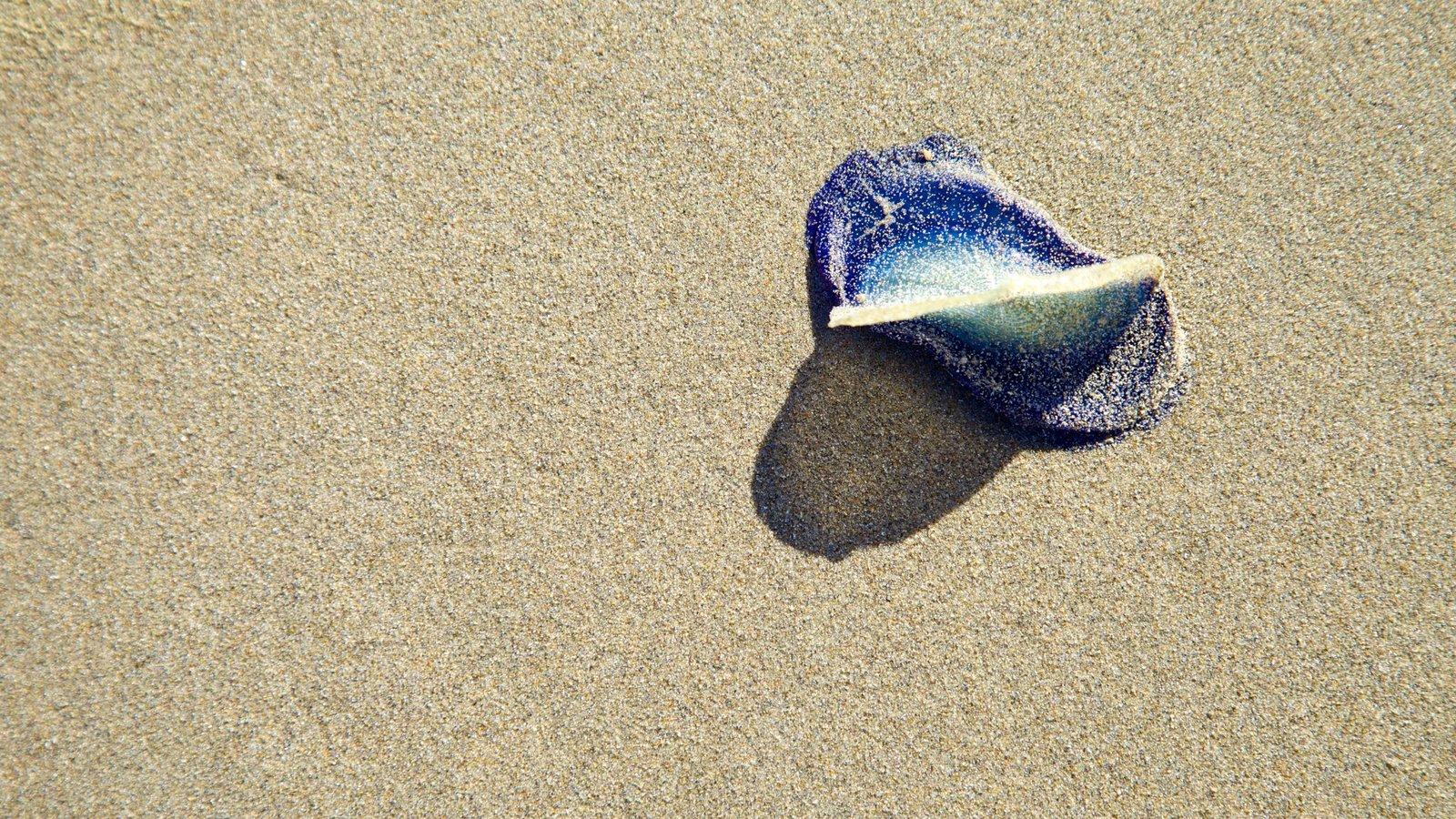 Bandon Beach caracterizando uma praia
