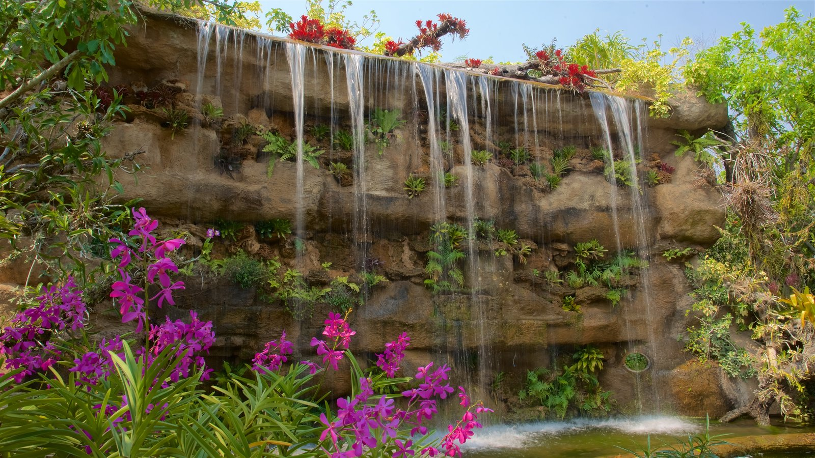 Gardens & Parks Pictures: View Images of North Thailand