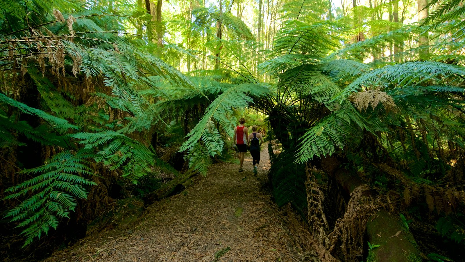 Dandenong Ranges National Park which includes hiking or walking as well as a couple