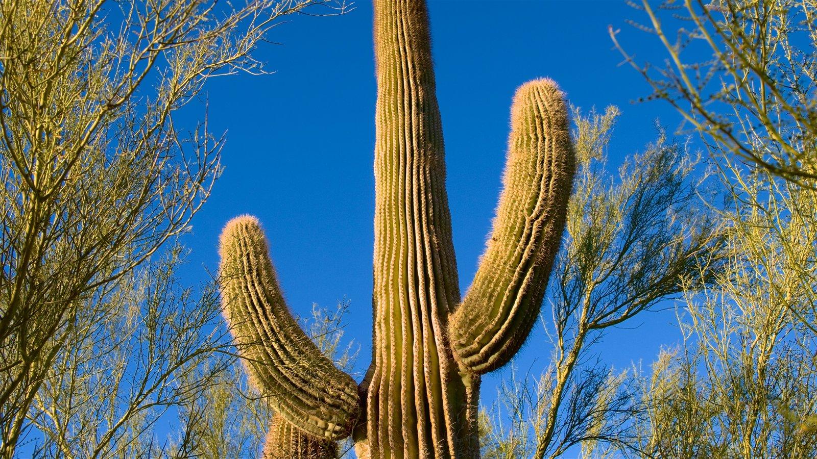 Desert Botanical Garden featuring desert views and tranquil scenes