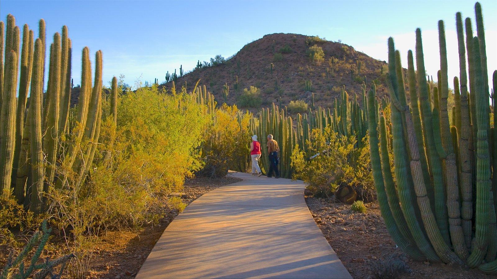 Desert Botanical Garden showing a park and desert views as well as a couple