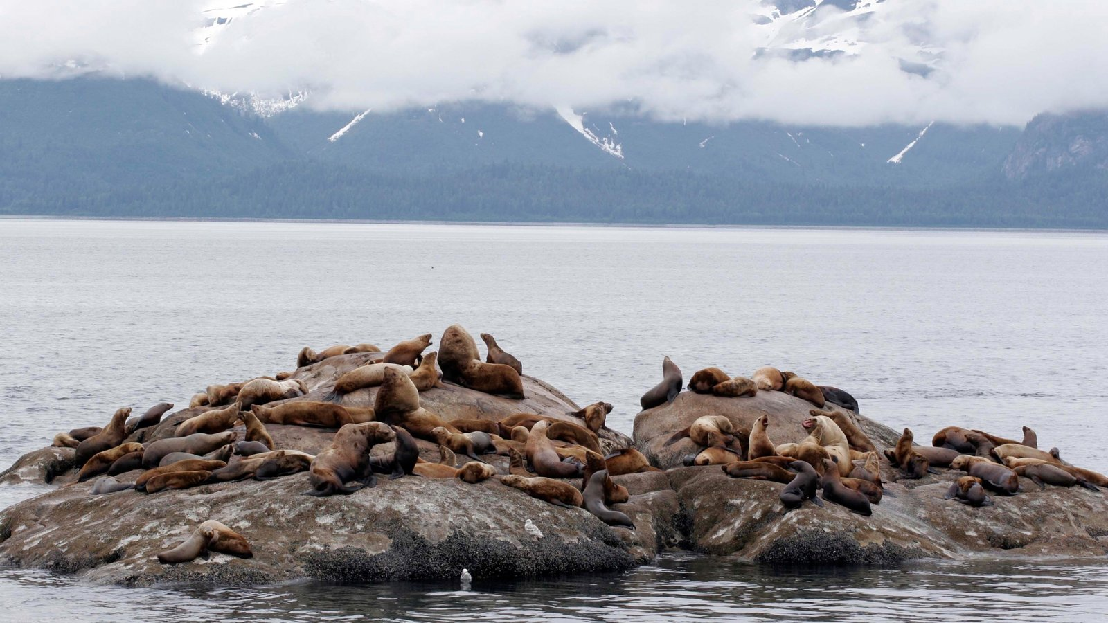 Glacier Bay National Park which includes marine life, rugged coastline and a bay or harbor