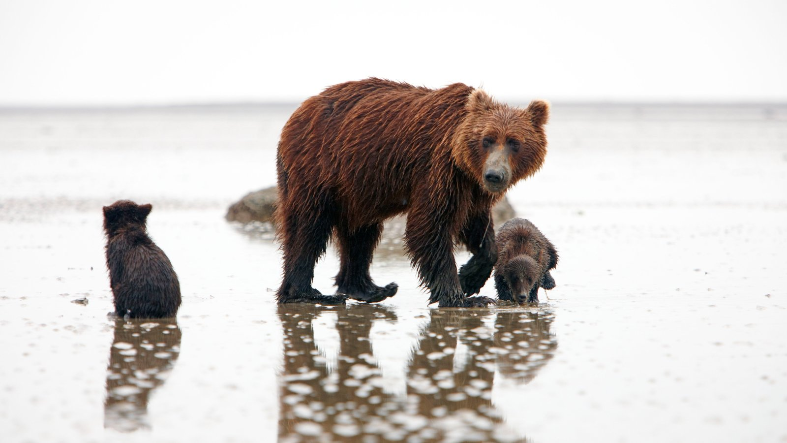 Lake Clark National Park and Preserve which includes dangerous animals