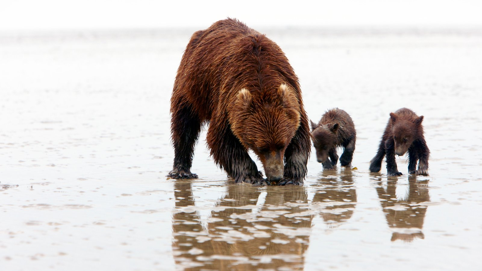 Lake Clark National Park and Preserve showing dangerous animals