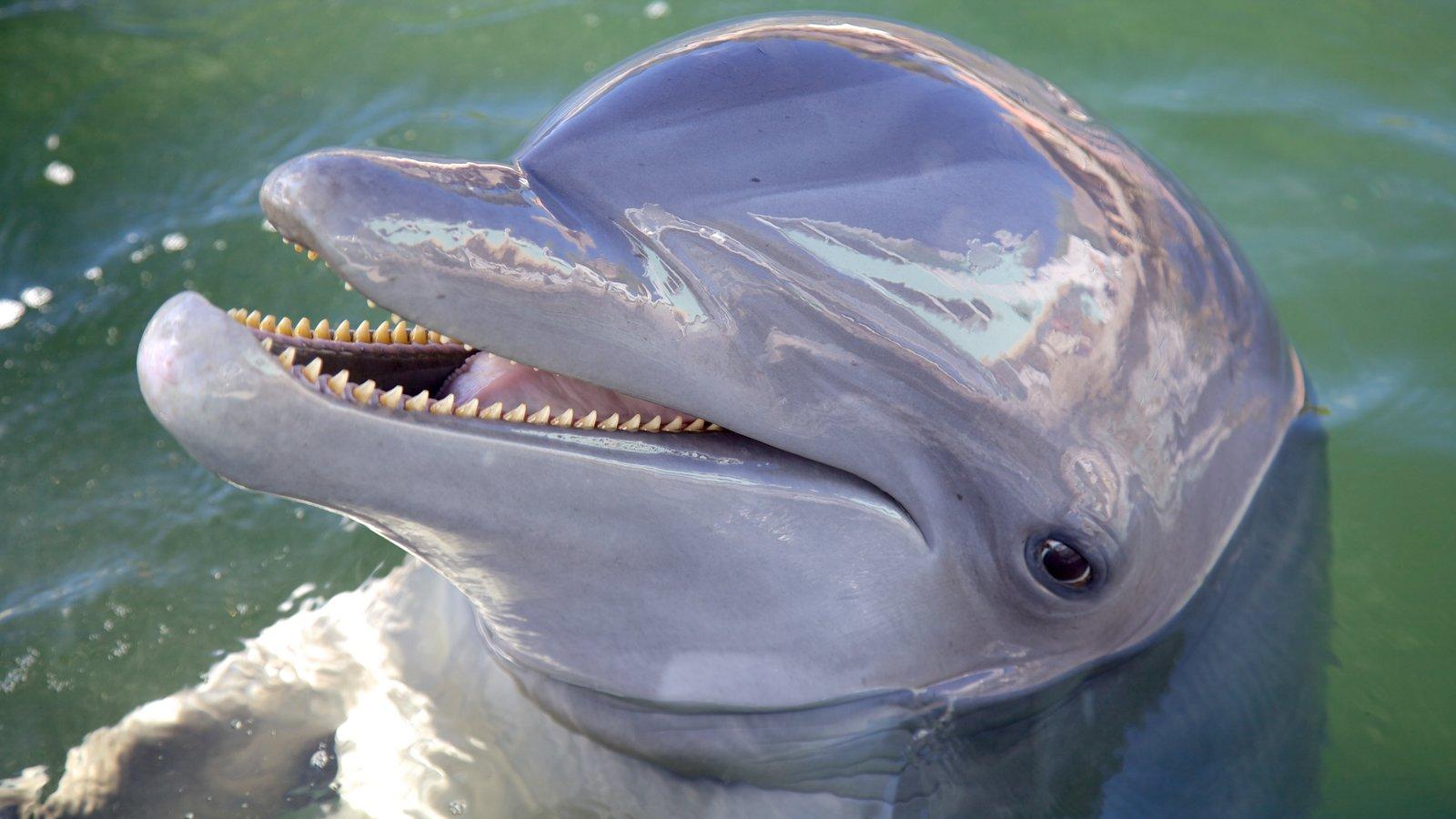 Dolphins Plus caracterizando vida marinha