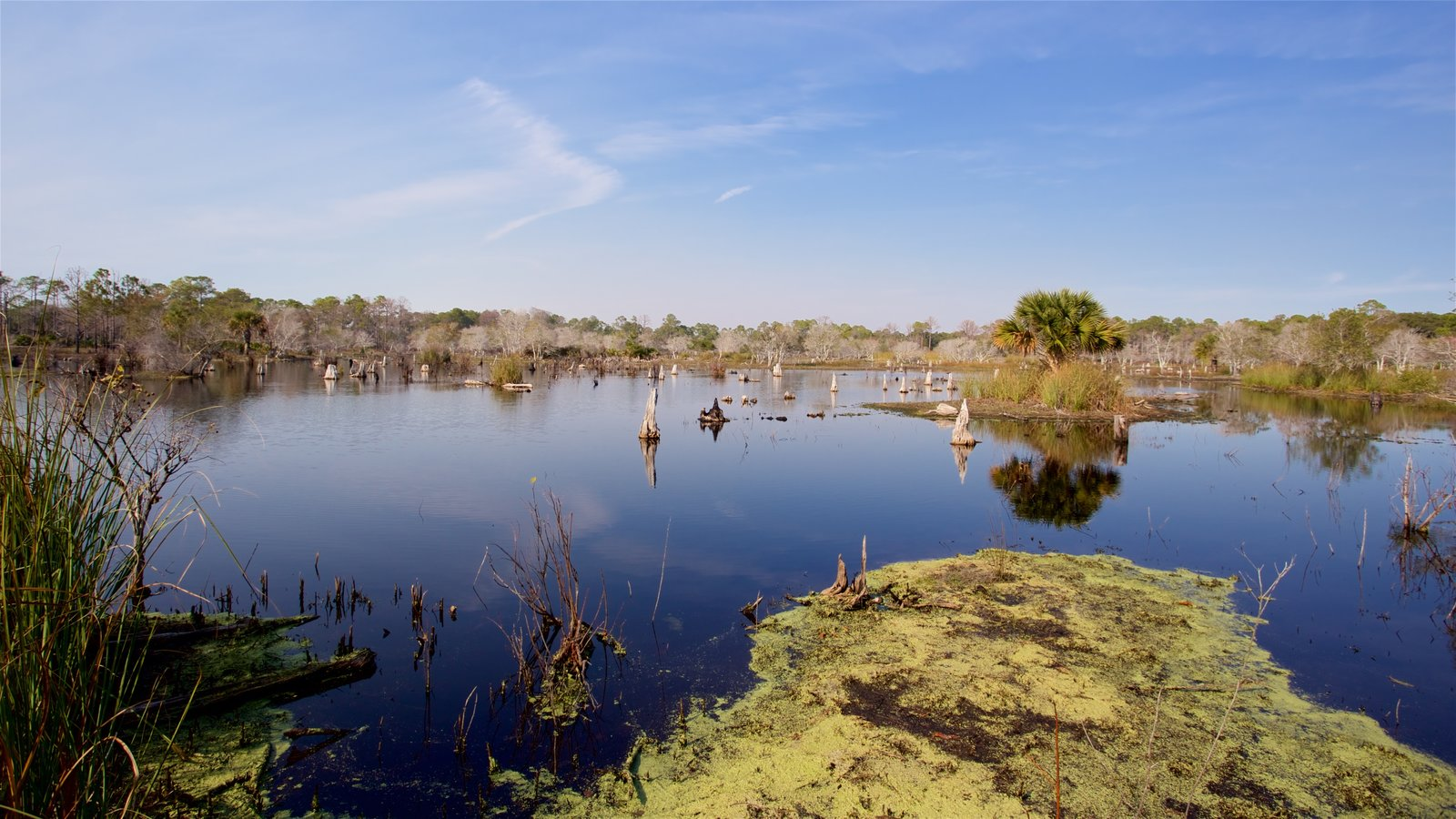 St. Andrews State Park featuring wetlands