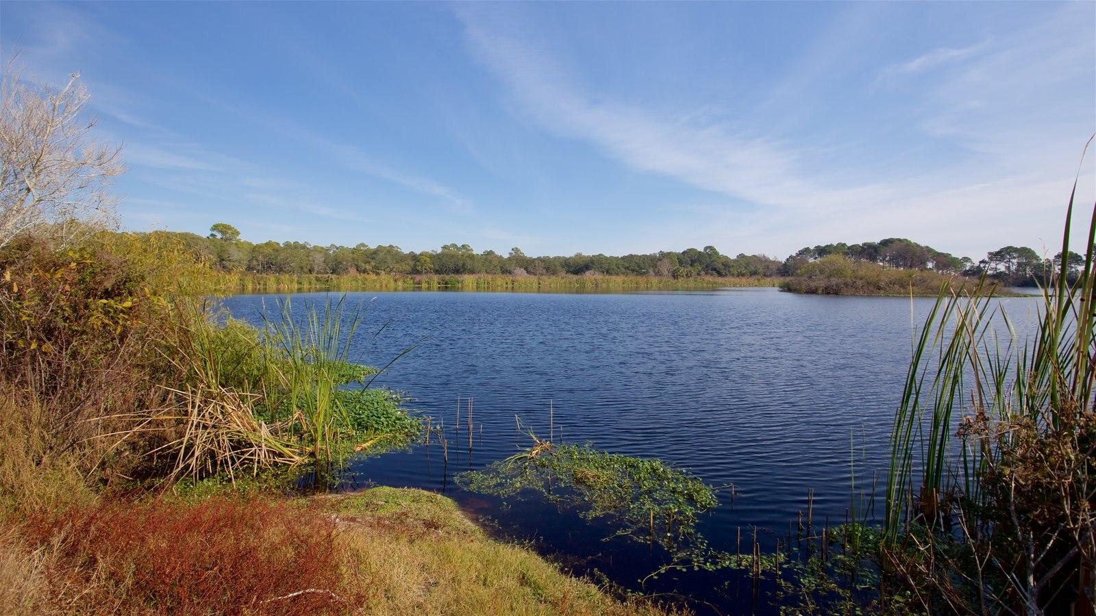 St. Andrews State Park showing wetlands