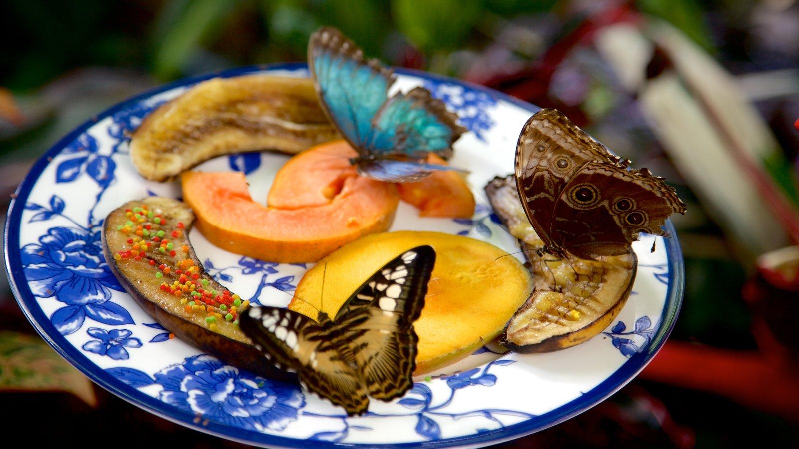Key West Butterfly and Nature Conservatory mostrando animais e comida