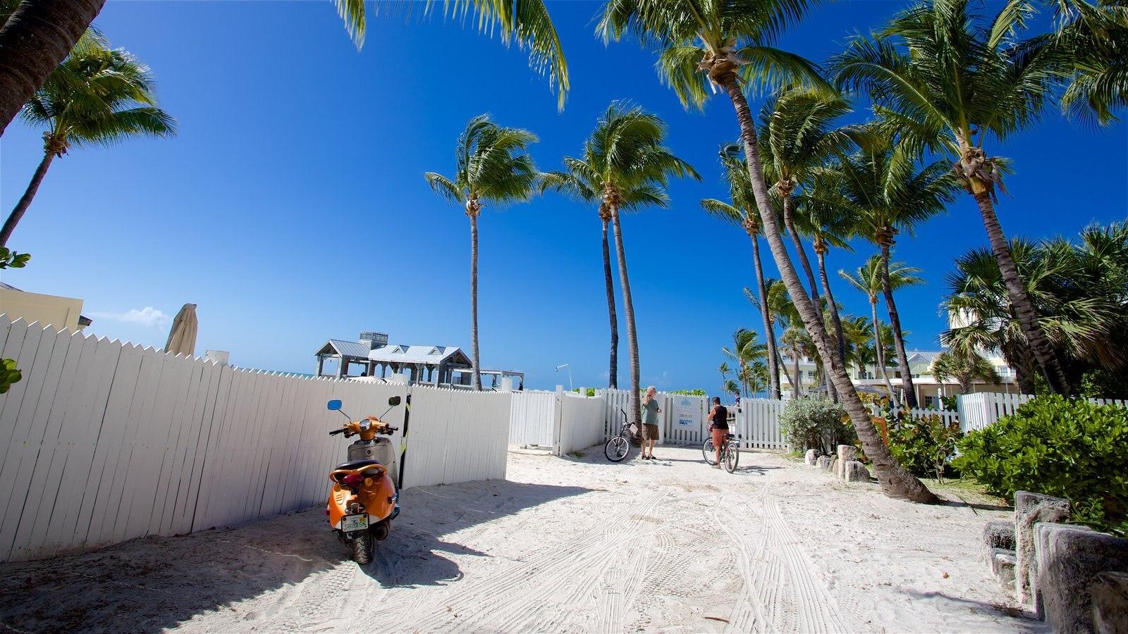 Sul da Flórida que inclui cenas tropicais e uma praia de areia assim como um casal