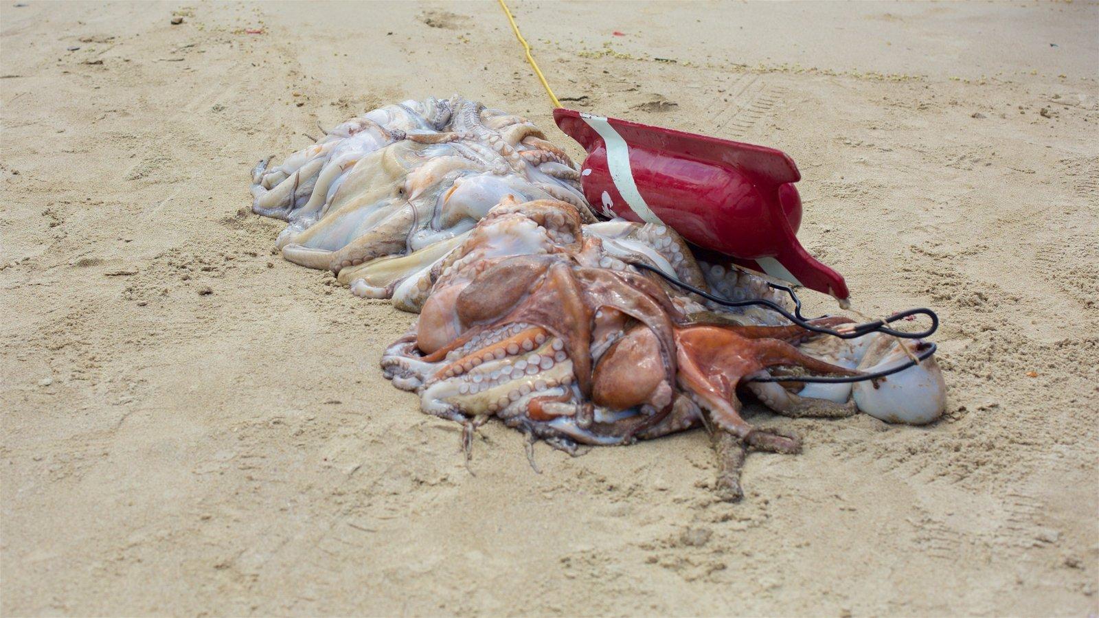 Praia de Copacabana que inclui uma praia de areia e pesca