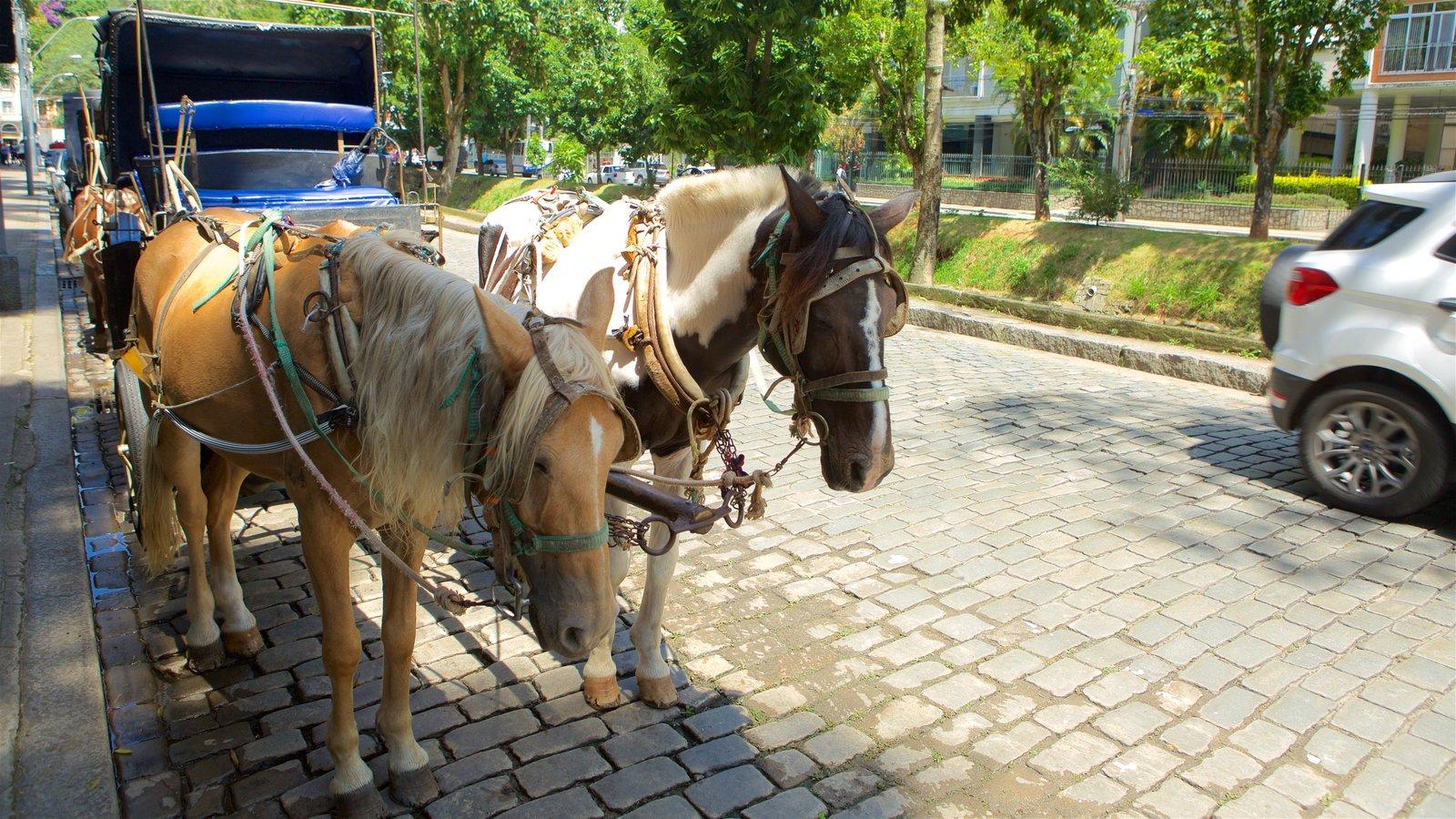 Petrópolis que inclui cenas de rua, animais terrestres e animais fofos ou amigáveis