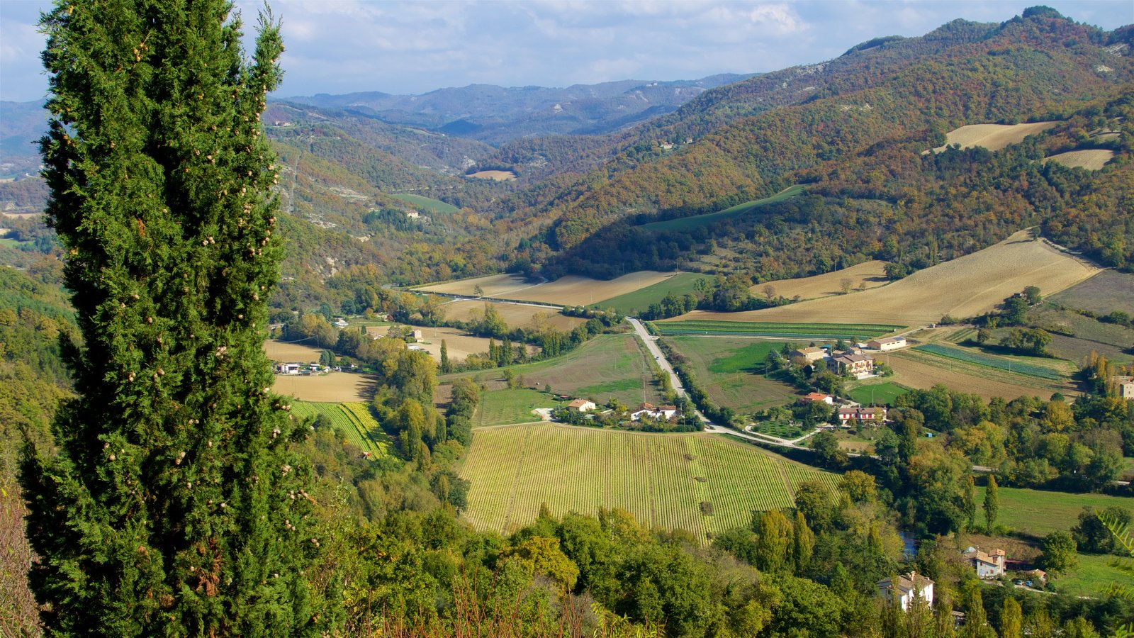 Montone showing tranquil scenes