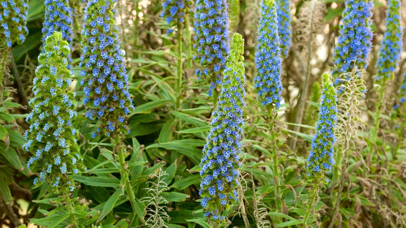 17-Mile Drive caracterizando flores silvestres