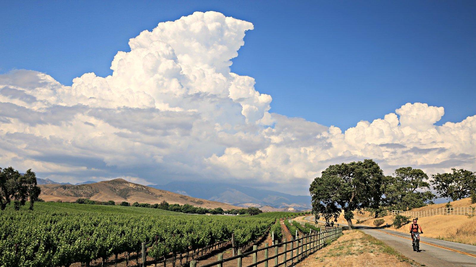 Santa Ynez Valley caracterizando cenas tranquilas e fazenda