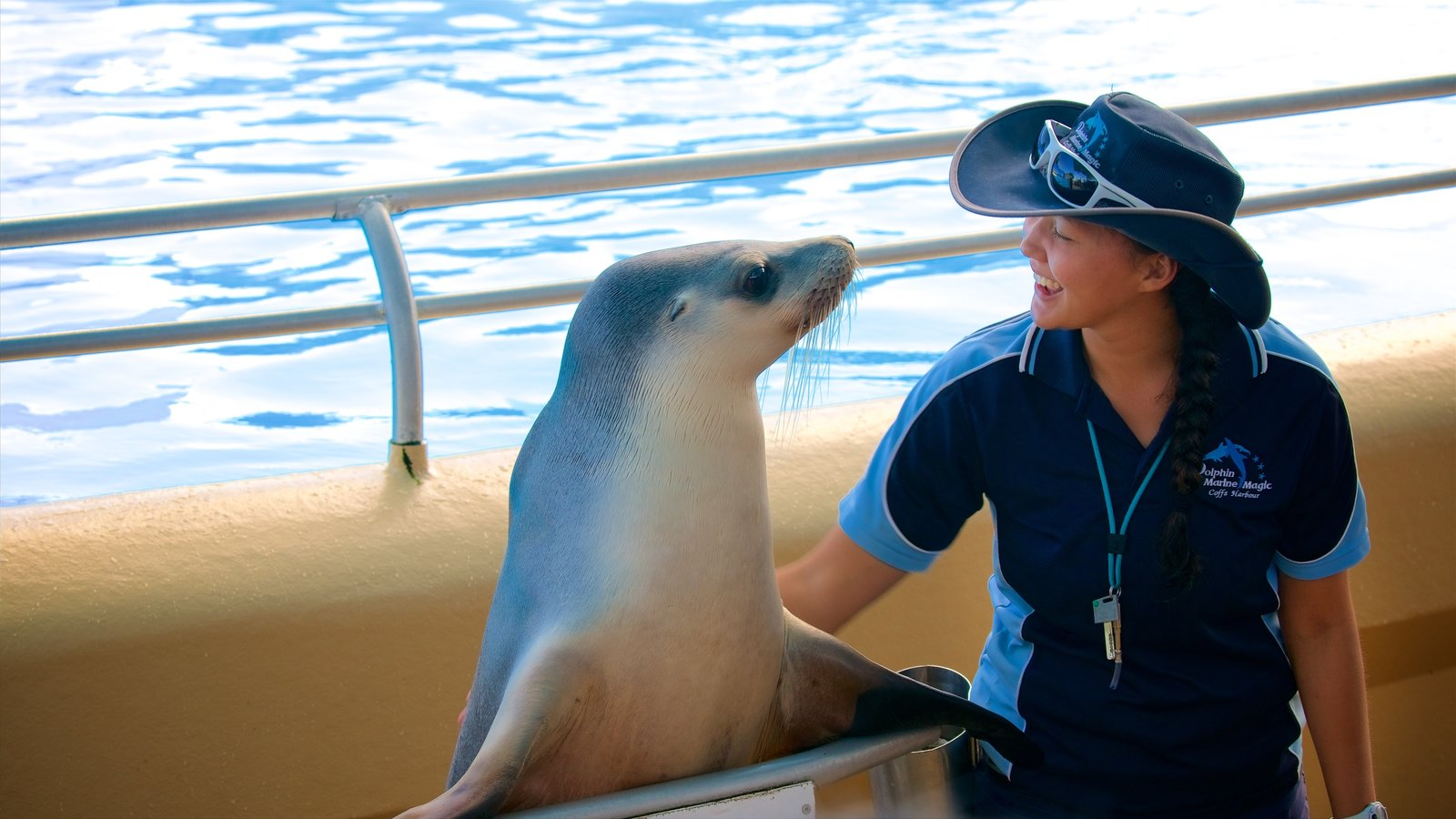 Dolphin Marine Magic featuring cuddly or friendly animals as well as an individual femail