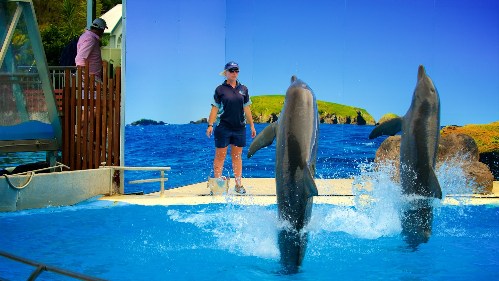 Dolphin Marine Magic which includes zoo animals and cuddly or friendly animals as well as an individual femail