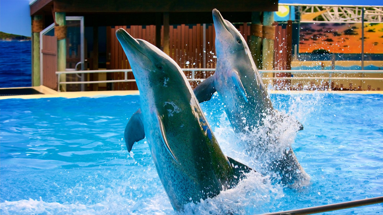 Dolphin Marine Magic which includes cuddly or friendly animals and zoo animals