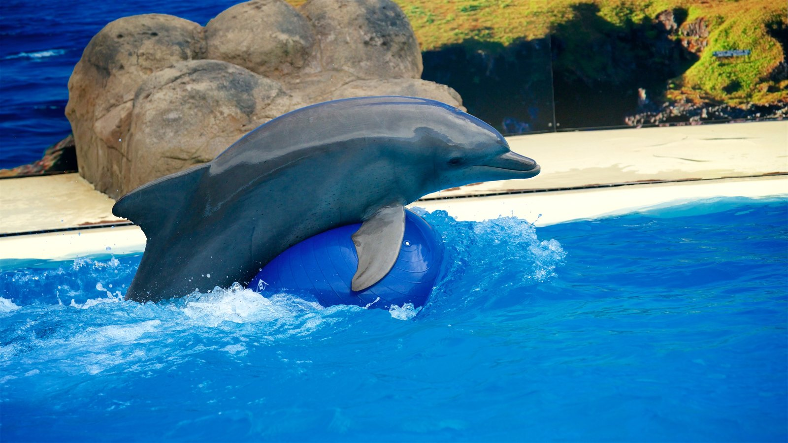 Dolphin Marine Magic showing zoo animals and cuddly or friendly animals