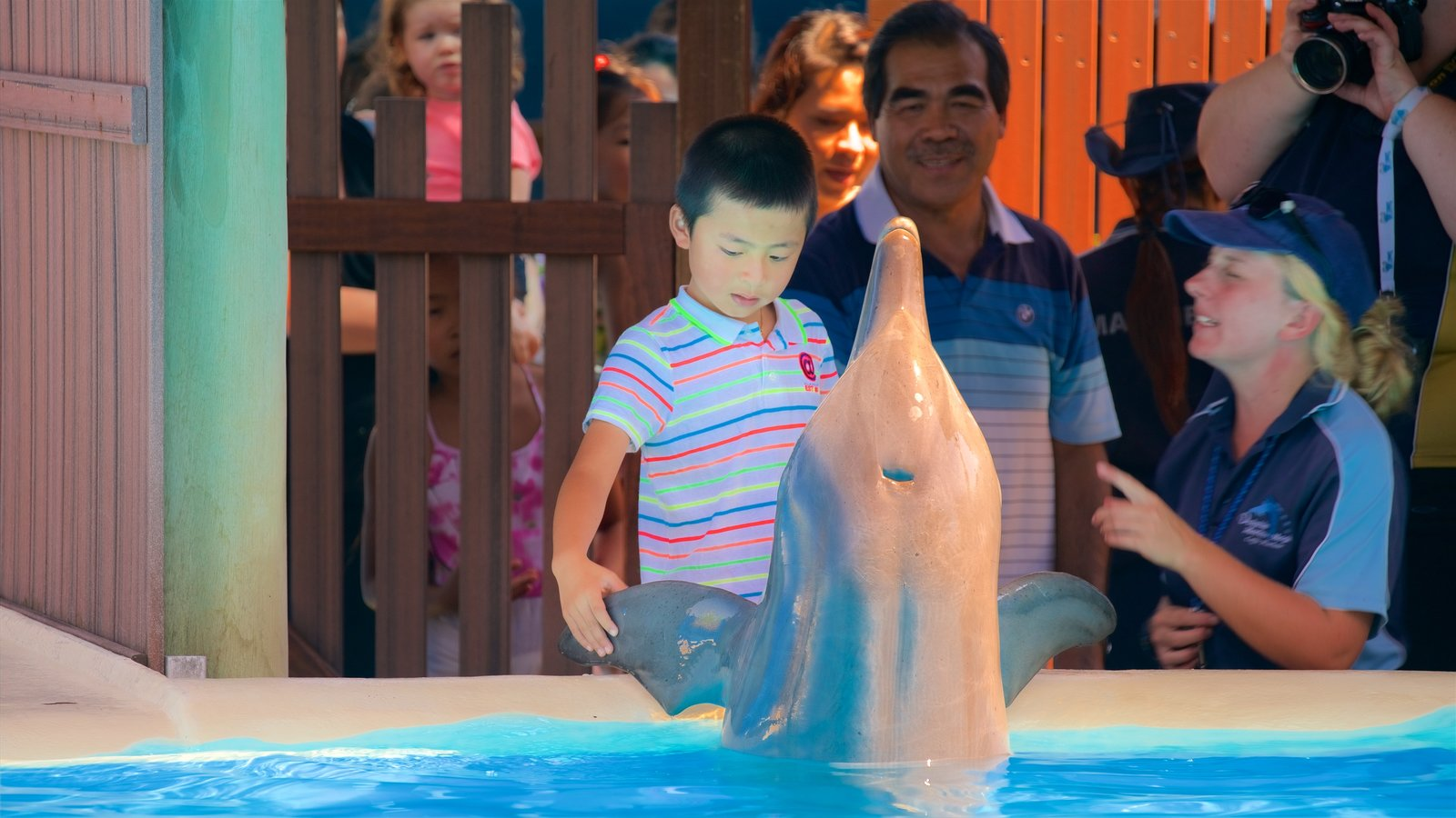 Dolphin Marine Magic which includes cuddly or friendly animals and zoo animals as well as a small group of people