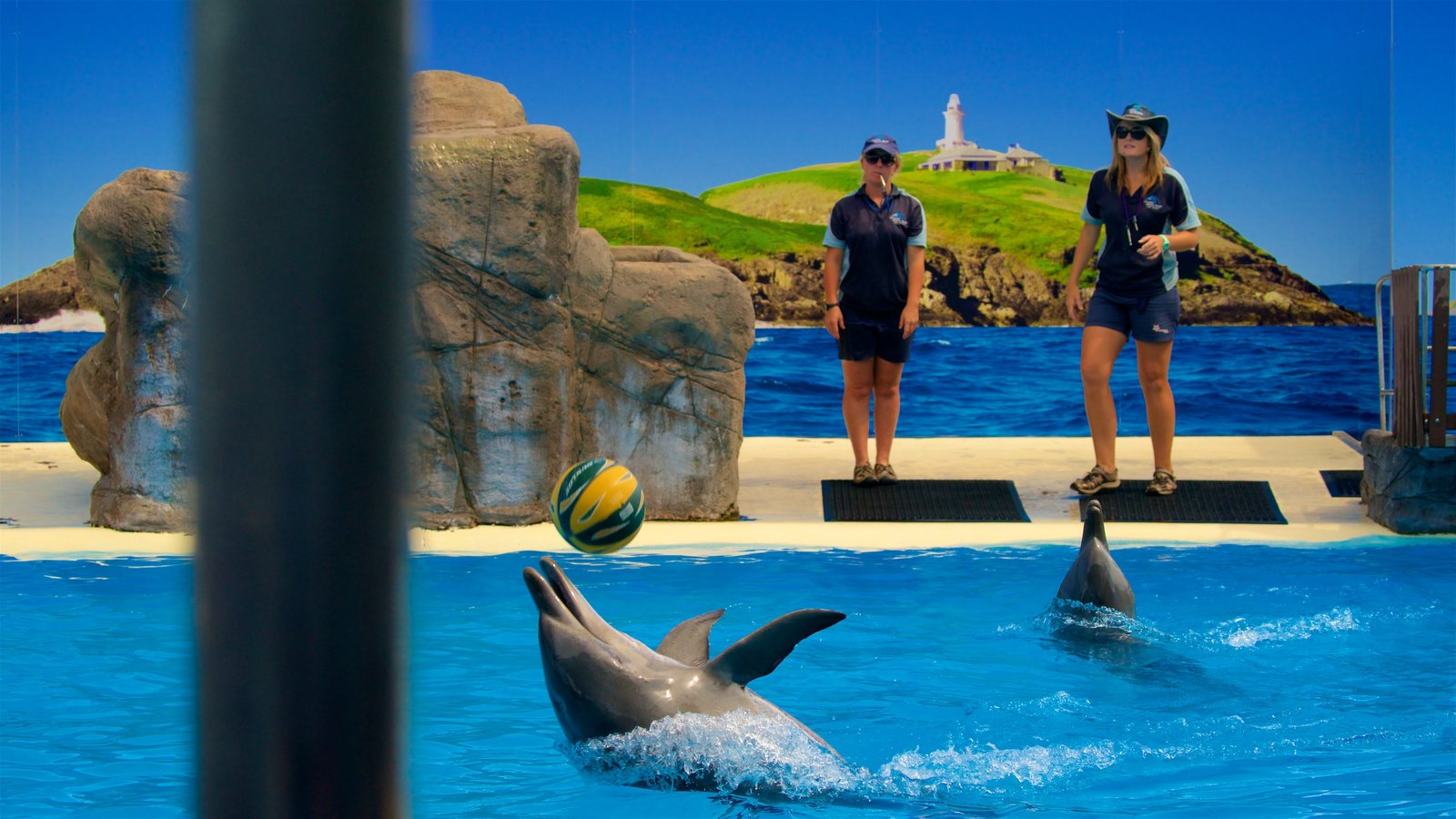 Dolphin Marine Magic featuring cuddly or friendly animals and zoo animals
