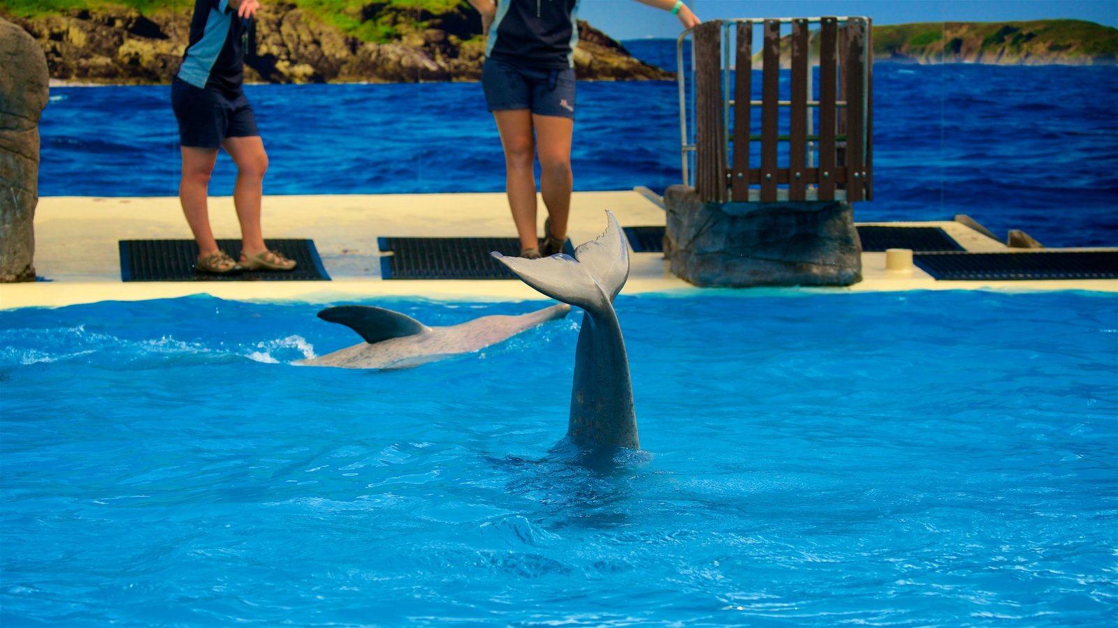 Dolphin Marine Magic showing cuddly or friendly animals and zoo animals