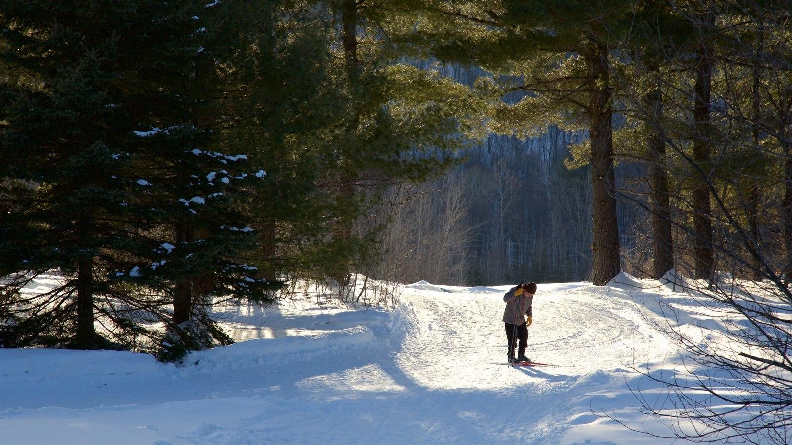 Ottawa caracterizando florestas, esqui na neve e neve