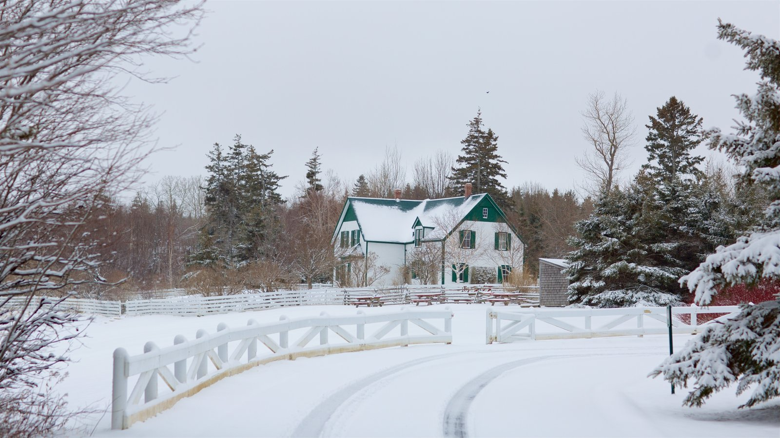 Green Gables showing snow and a house