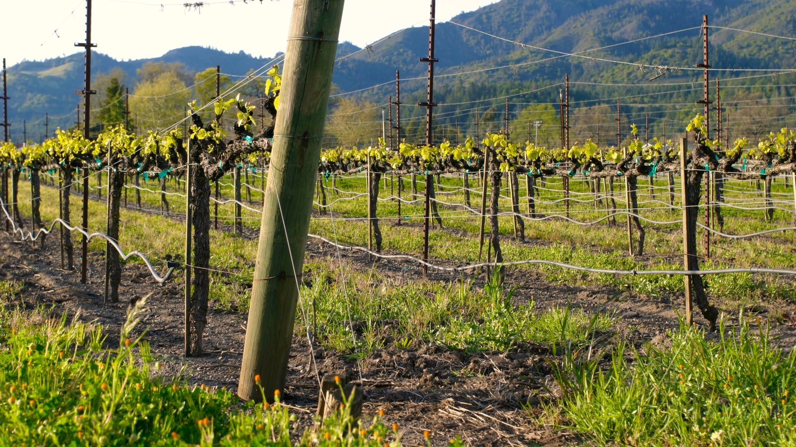 Navigate The State – Discover California Wines