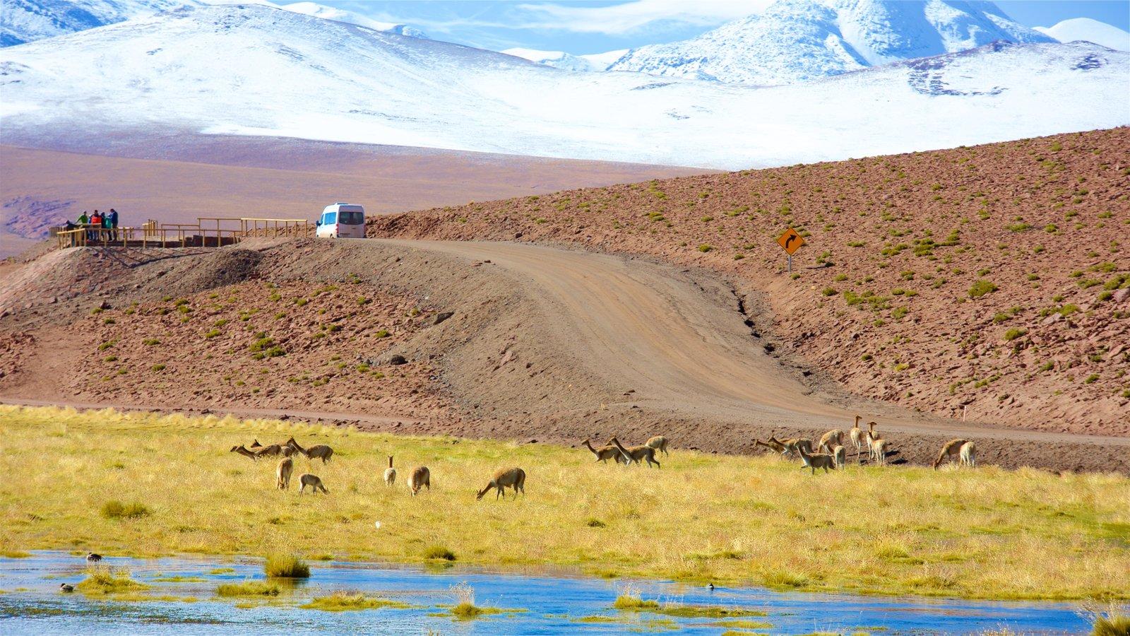 Chile mostrando paisagem, cenas tranquilas e um lago ou charco
