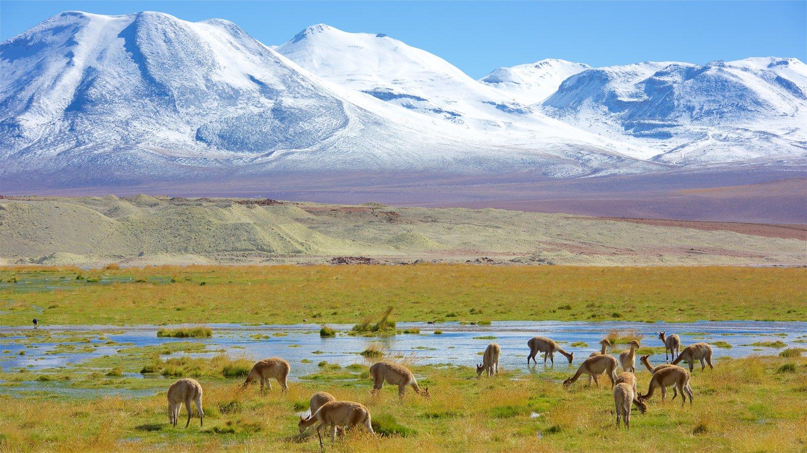 Chile caracterizando cenas tranquilas, animais terrestres e montanhas