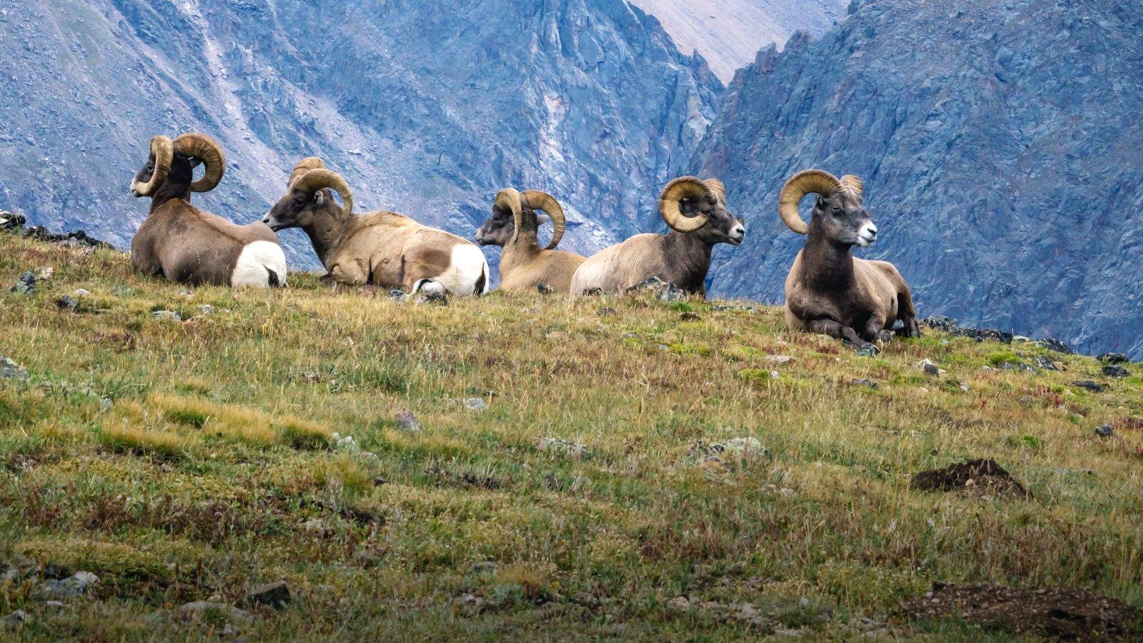 Rocky Mountain National Park que inclui animais terrestres e cenas tranquilas