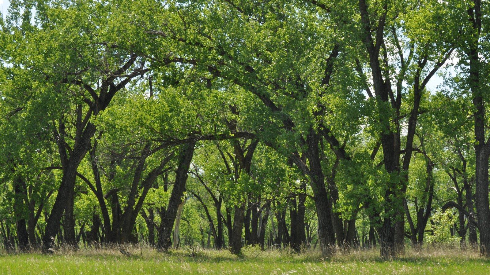 Parque Nacional de Theodore Roosevelt que inclui cenas tranquilas