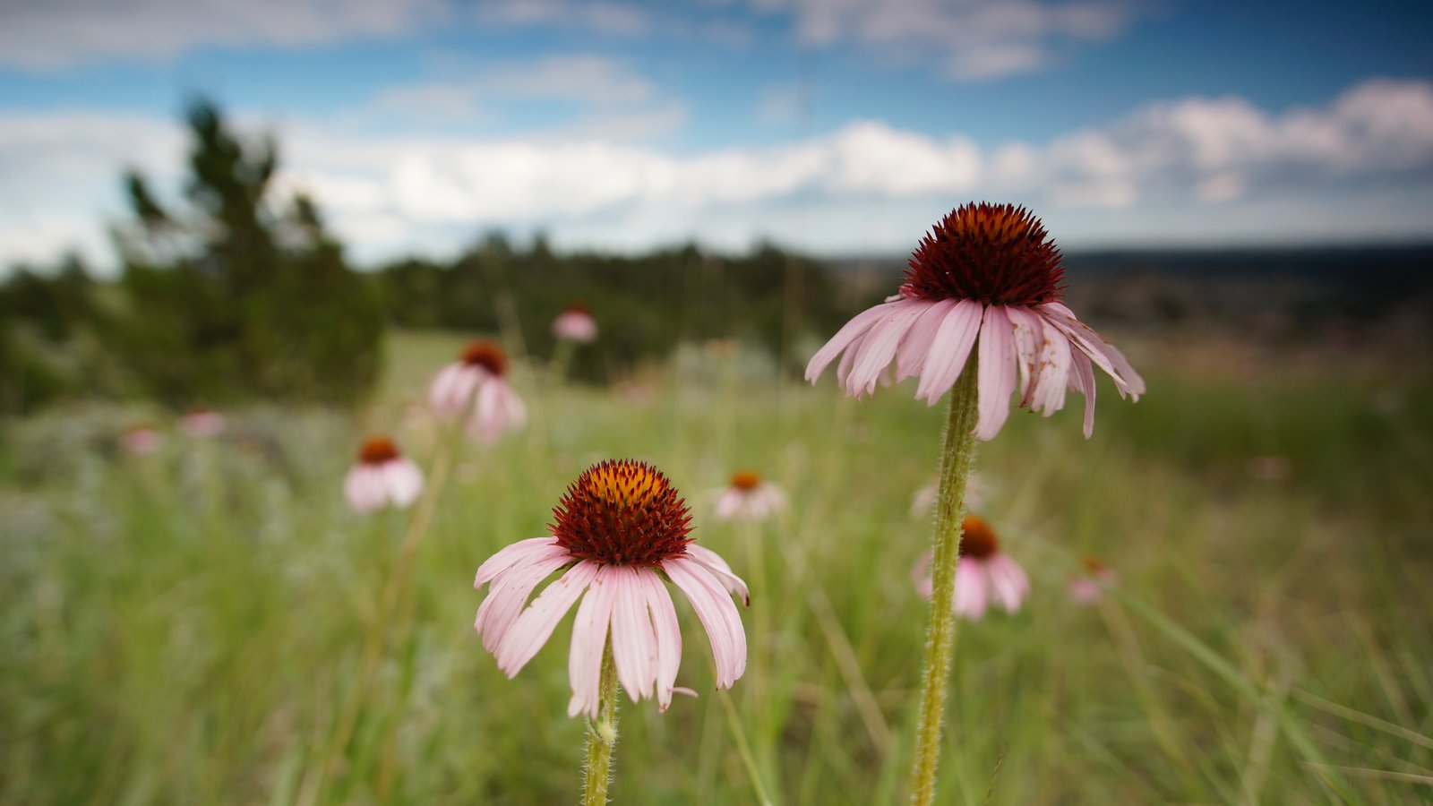Parque Nacional de Theodore Roosevelt caracterizando flores silvestres e cenas tranquilas