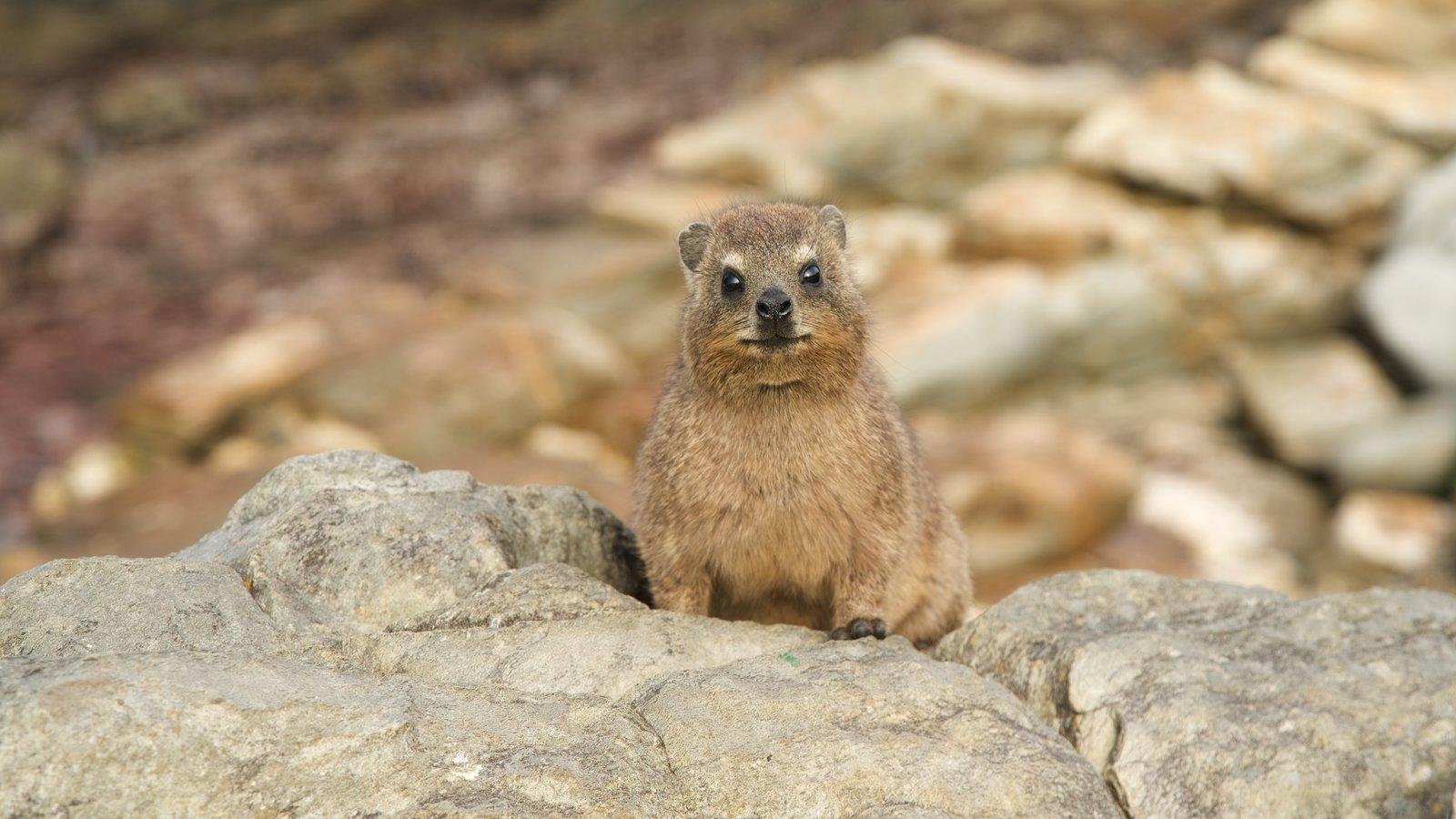 Tsitsikamma National Park featuring cuddly or friendly animals