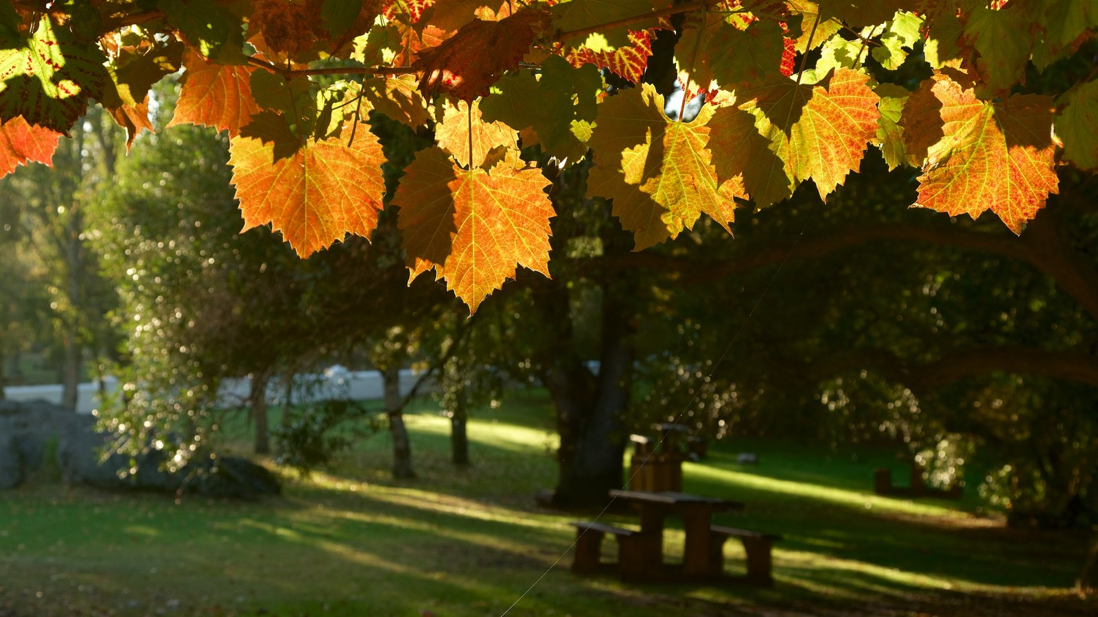 Spier Wine Estate featuring fall colors