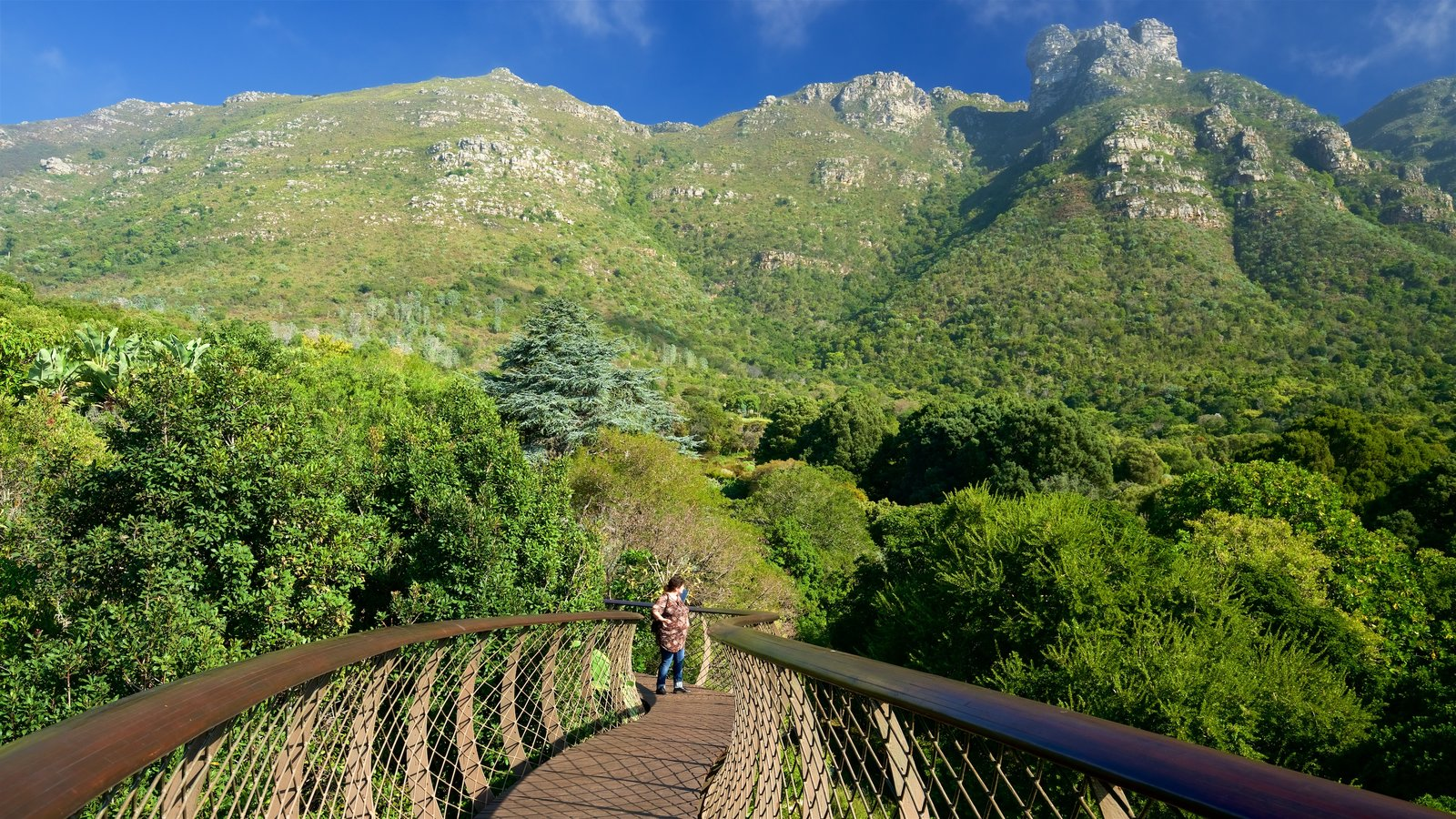 Kirstenbosch National Botanical Garden showing a park and a bridge as well as an individual femail