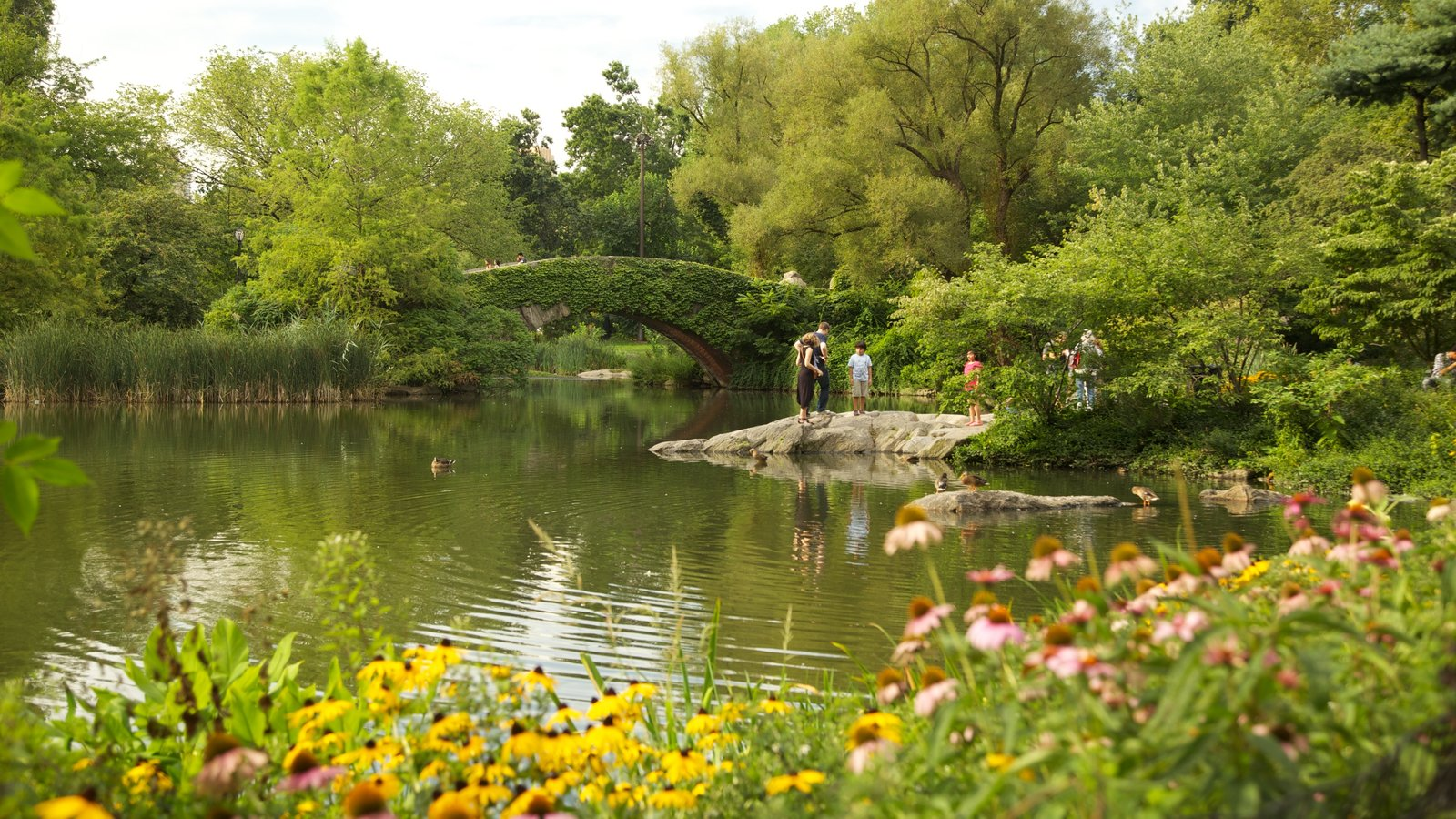 Central Park which includes a garden, a pond and flowers