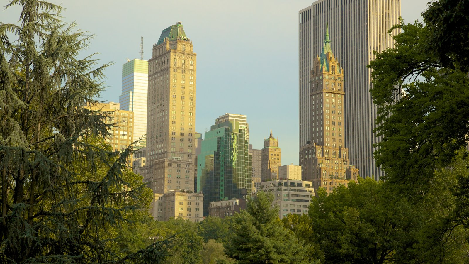 Central Park showing skyline, a garden and a city