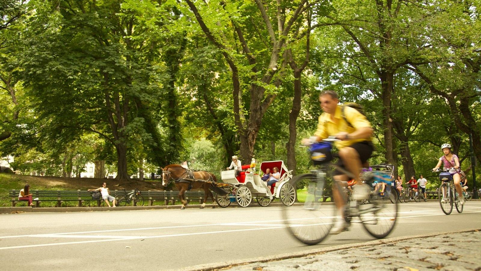 Central Park mostrando uma cidade, ciclismo e animais terrestres
