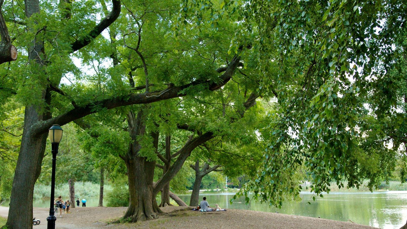Brooklyn caracterizando um jardim, cenas de floresta e um lago