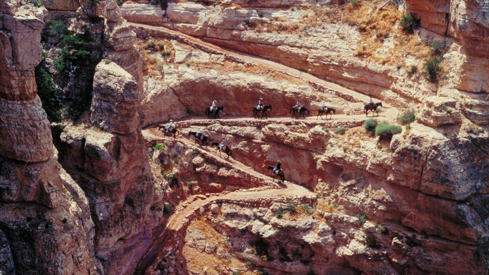 Grand Canyon que inclui cavalgada, paisagem e um desfiladeiro ou canyon