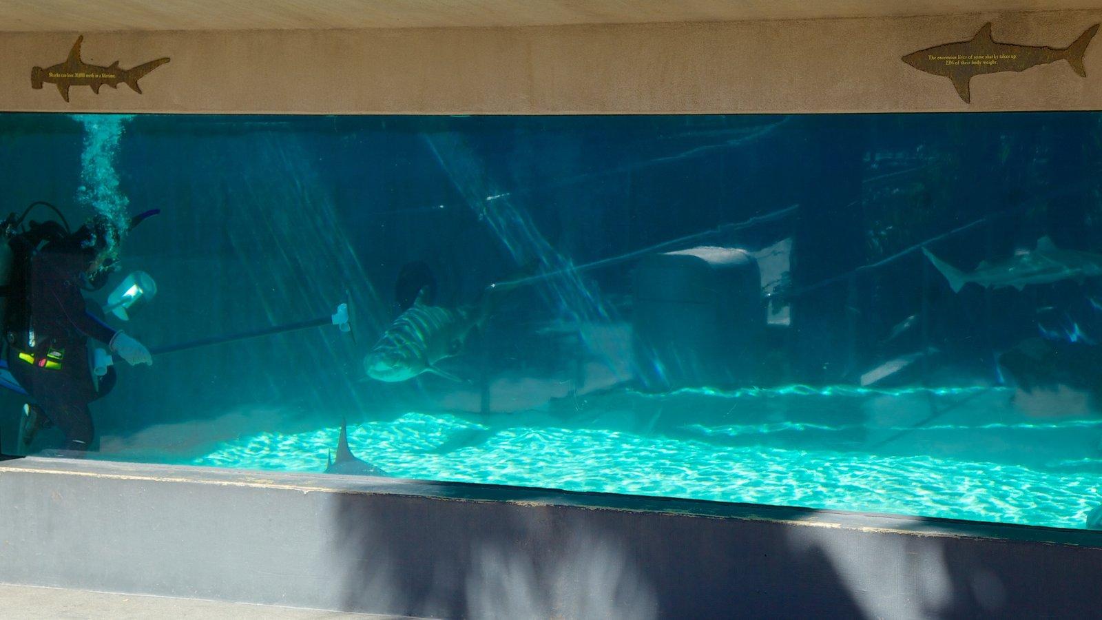 Aquarium Of The Pacific Pictures View Photos Images Of